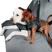 BMW Dog Safety Harness